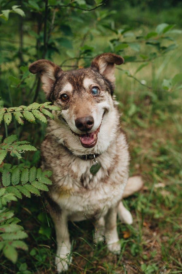 红色杂种狗的画象在森林里 免版税库存图片