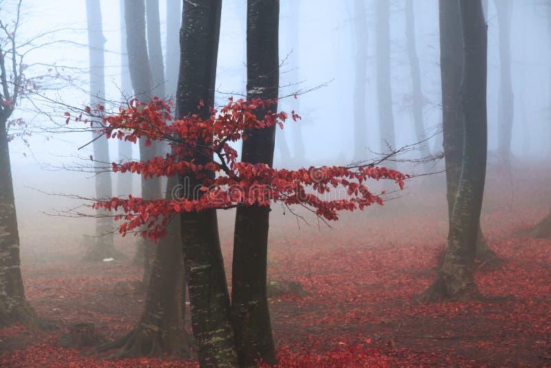 红色树在森林里 库存图片