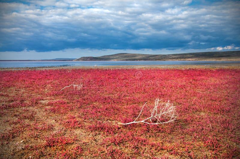 红色植物 免版税图库摄影