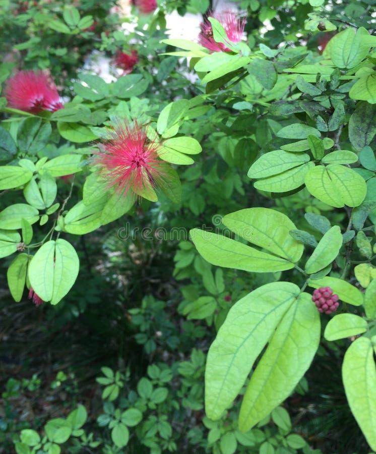 红色模糊的花用红色莓果 免版税库存图片