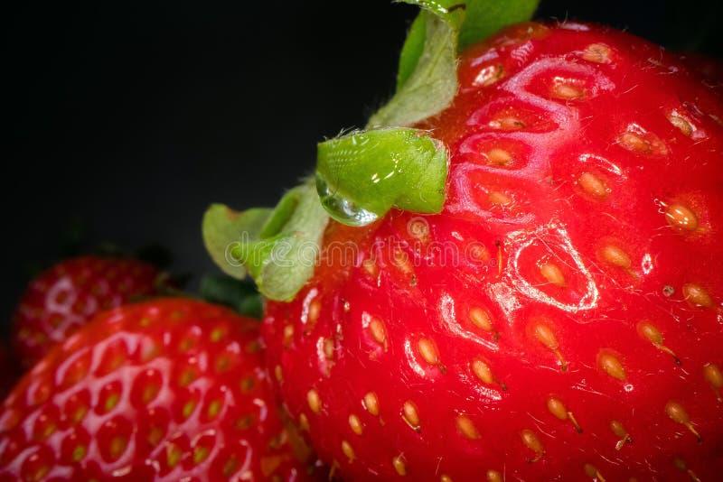 红色水多的草莓宏观射击在黑背景的 甜被收获的莓果背景,健康食品生活方式 免版税库存图片