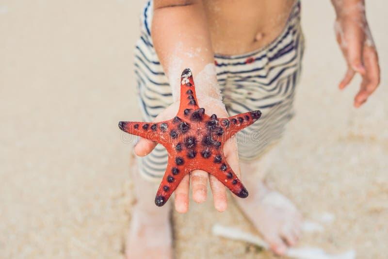 红色海星在手上,在海旁边 免版税库存照片