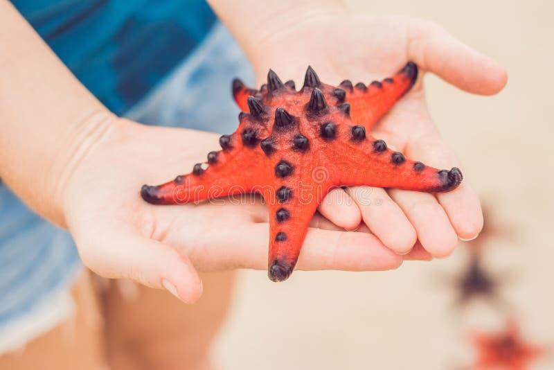 红色海星在手上,在海旁边 图库摄影