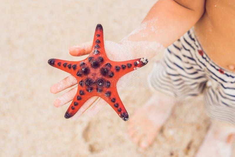 红色海星在手上,在海旁边 免版税库存图片