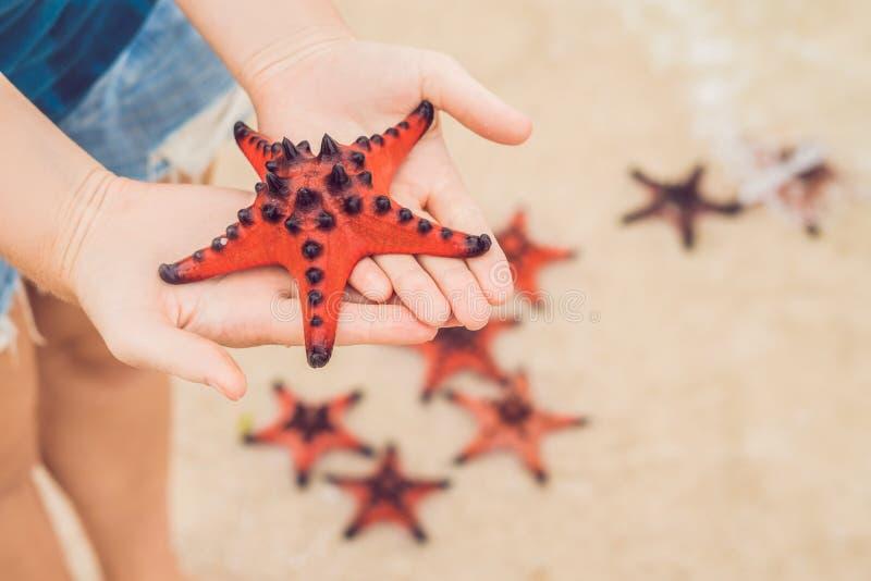 红色海星在手上,在海旁边 免版税图库摄影