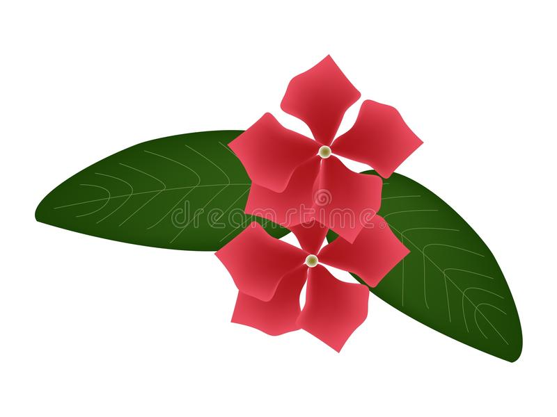 红色海角荔枝螺花或马达加斯加荔枝螺花 向量例证