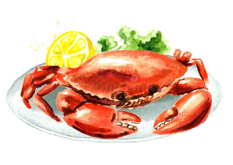 红色煮熟的螃蟹用在板材的柠檬,海鲜,在白色背景隔绝的水彩手拉的例证 向量例证