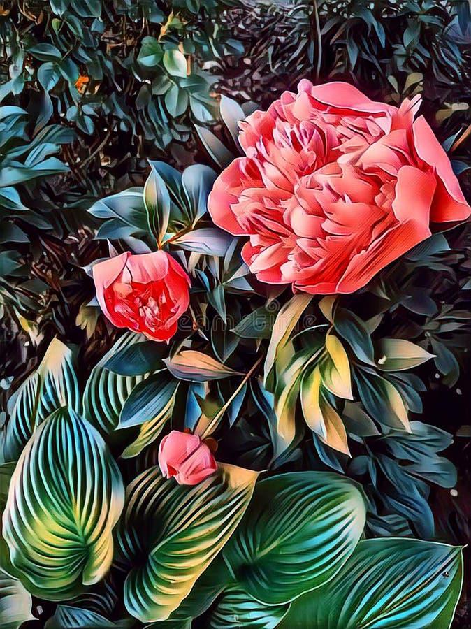 红色牡丹在一张花床上的春天在房子附近 库存照片