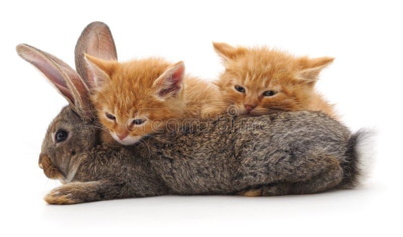 红色猫和兔子 库存图片