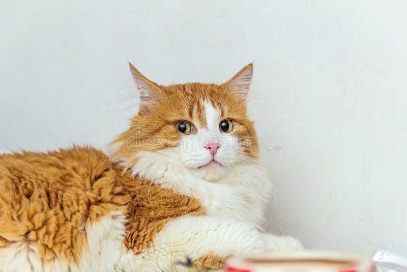 红色猫怀疑地 图库摄影