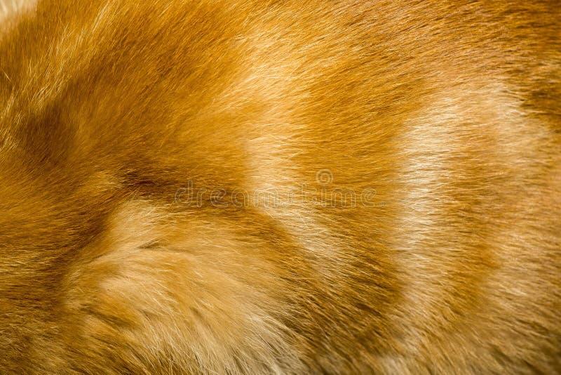 红色猫毛皮纹理 库存图片