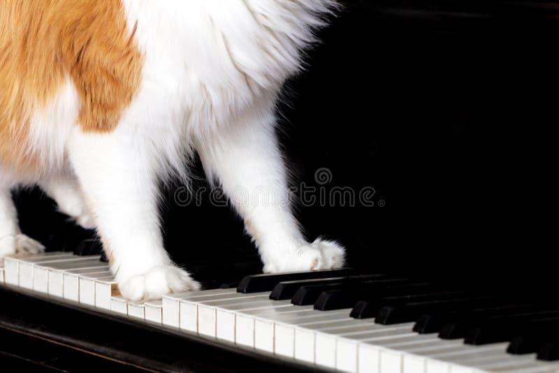 琴键猫的红色在酒店的爪子淮安性情趣图片