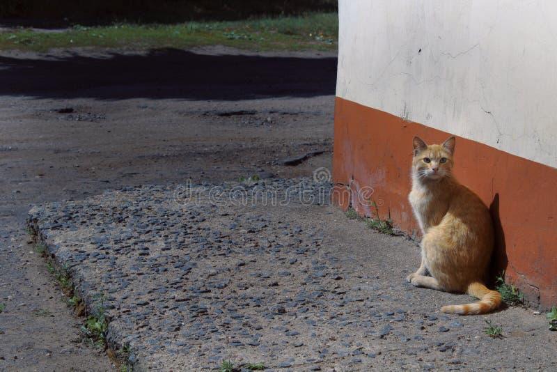 红色猫 库存图片