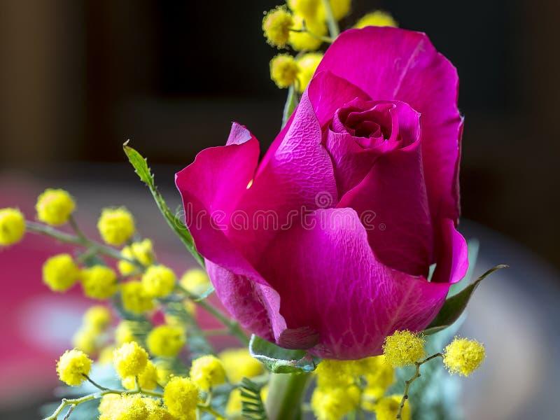 红色玫瑰和含羞草 库存图片
