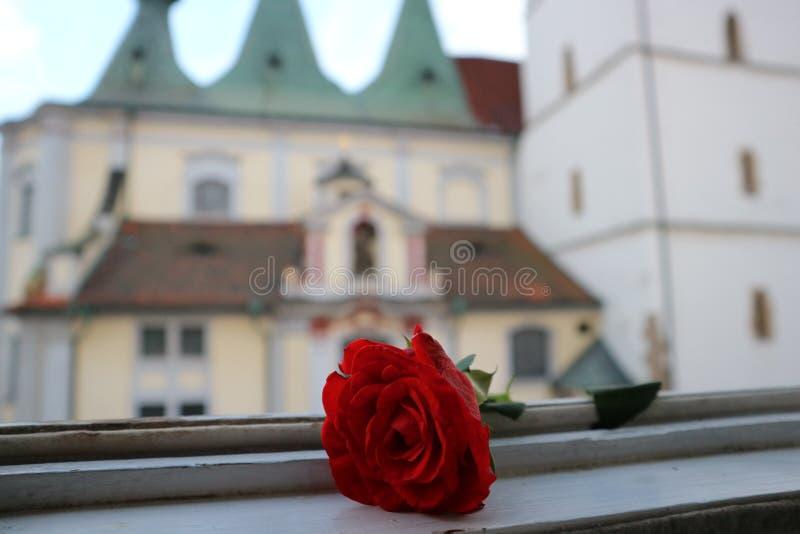 红色玫瑰和教会 免版税库存图片