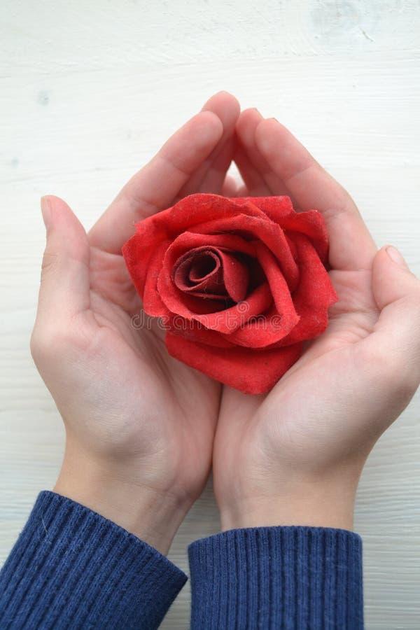 红色玫瑰在女孩的手上白色背景的装饰设计的 华伦泰概念 男孩庭院女孩亲吻的爱情小说 人生活方式概念 库存照片