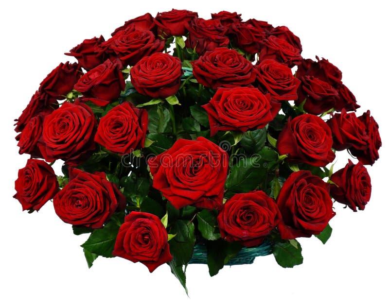 51红色玫瑰篮子  库存图片