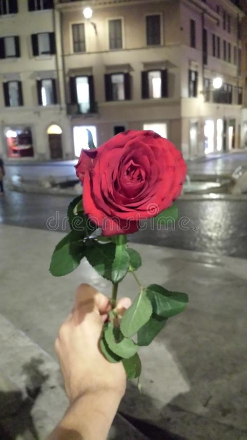 红色玫瑰罗马夜步行 库存图片