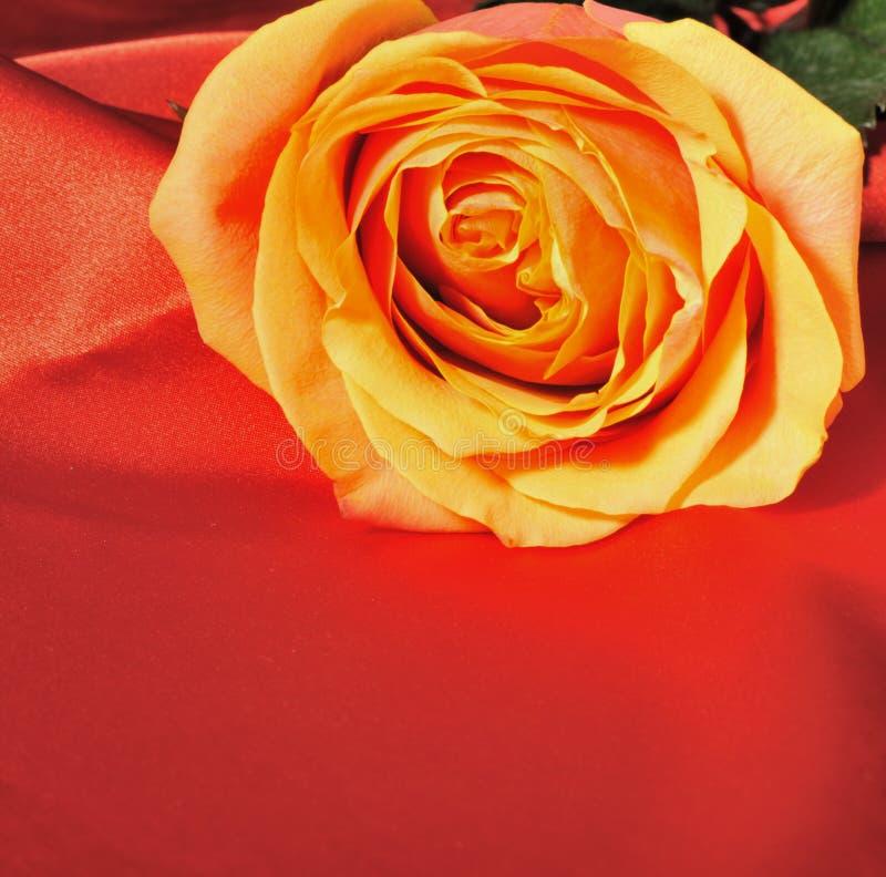 红色玫瑰色丝绸 免版税库存照片