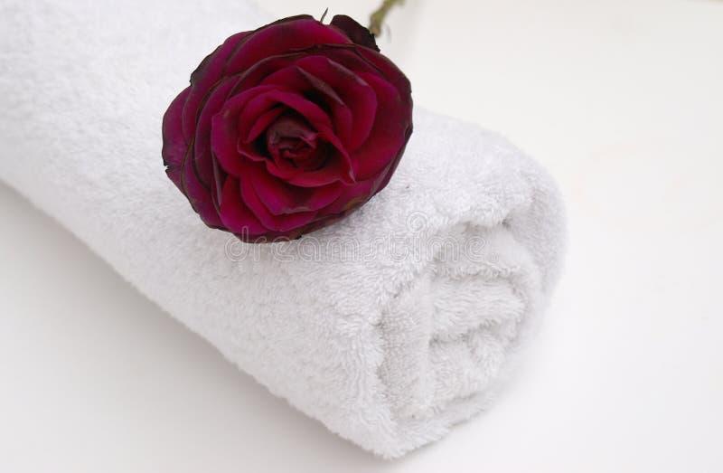 红色玫瑰色温泉 免版税库存照片