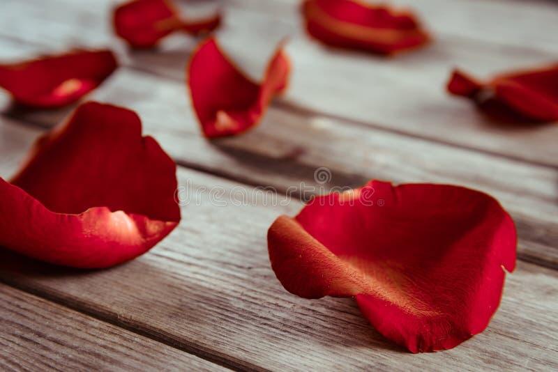 红色玫瑰花瓣的特写镜头图象 免版税库存图片