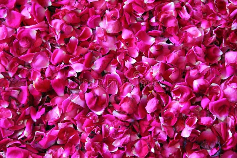 红色玫瑰花瓣背景 免版税库存图片