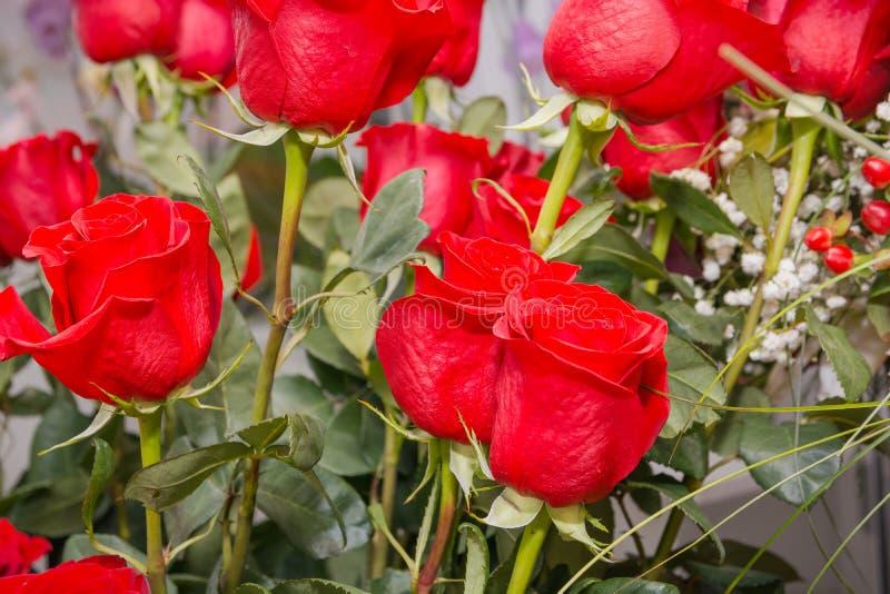 红色玫瑰 它是很多英国兰开斯特家族族徽 免版税库存照片