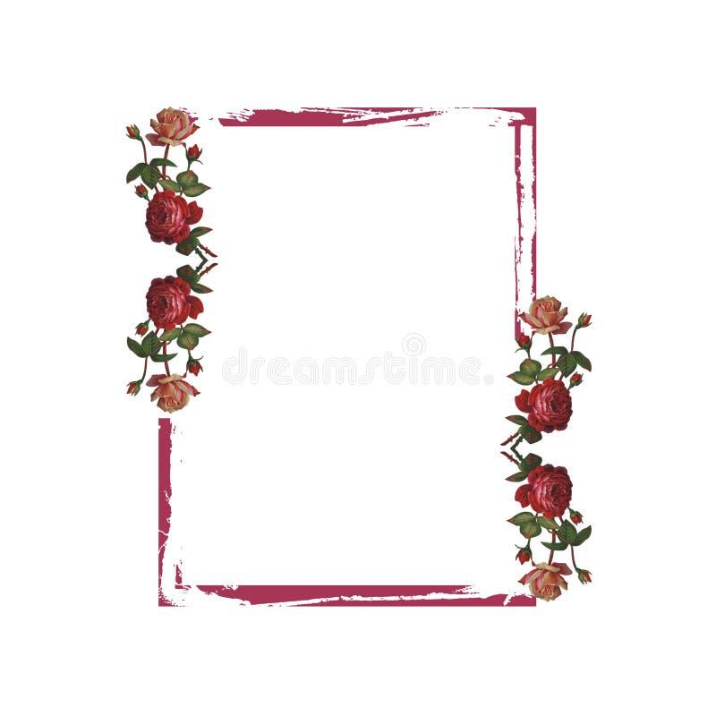 红色玫瑰grunge框架 库存图片