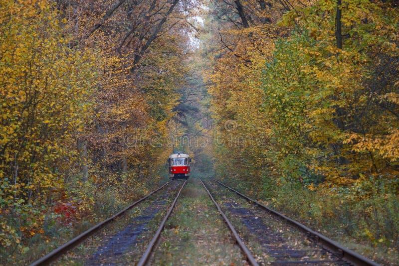 红色电车乘驾通过秋天森林 库存图片