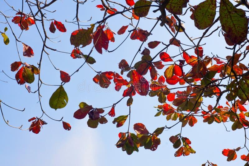 红色留下颜色春天 免版税库存图片