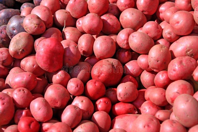 红色的土豆 库存图片