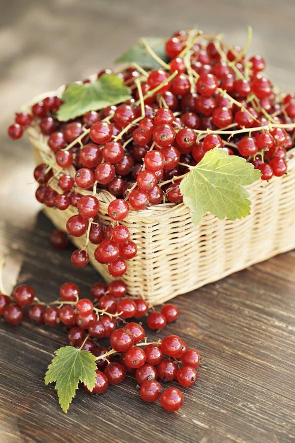 红色的无核小葡萄干 免版税库存图片