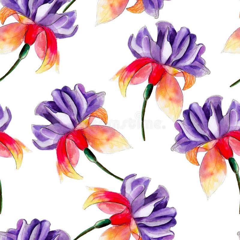 紫红色的花水彩无缝的样式 在白色背景隔绝的明亮的热带花 向量例证