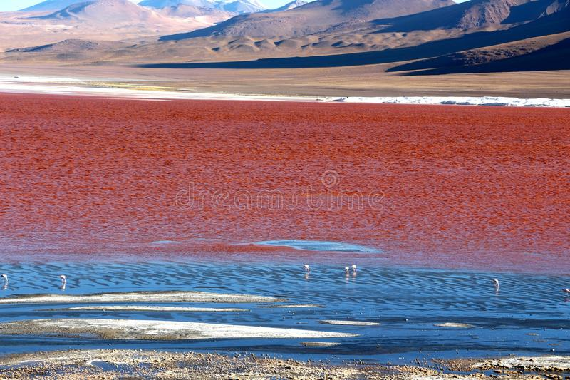 红色盐水湖玻利维亚 库存图片