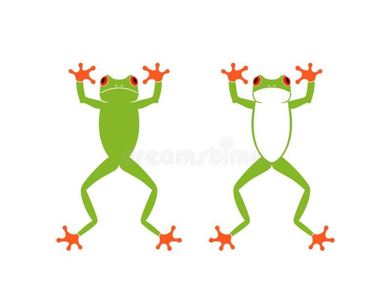 红色眼睛青蛙 因为肋前缘查找了青蛙青蛙生长高典型地暗示命名尼加拉瓜其他巴拿马rica结构树结构树植被 在空白背景的查出的青蛙 向量例证