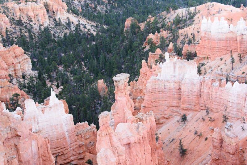 红色石头在布赖斯峡谷 库存图片