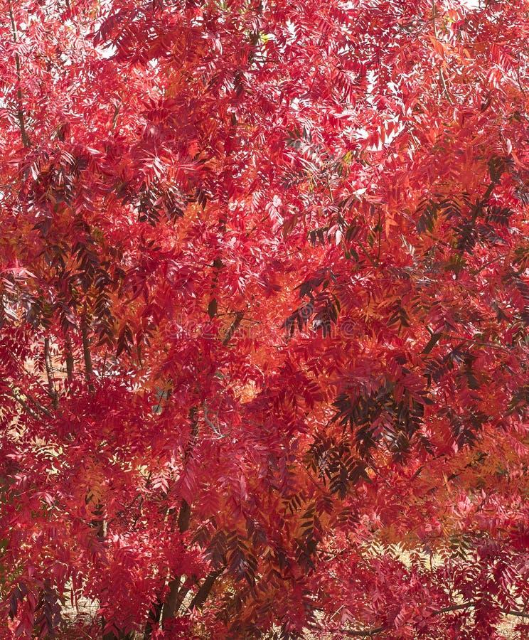 红色秋叶五颜六色的背景 免版税库存图片