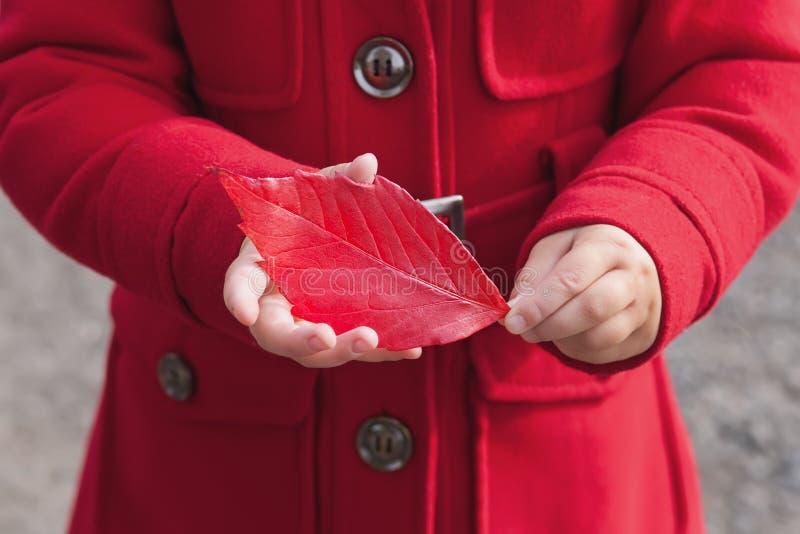 红色秋叶在儿童手上 图库摄影