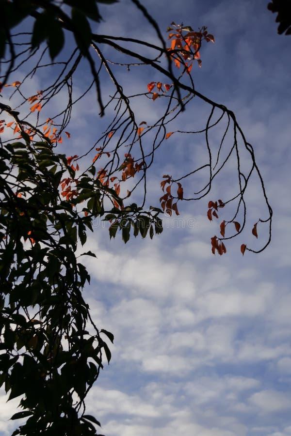 红色秋季的季节和桔子在晚上太阳离开 库存照片