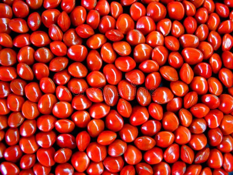 红色种子 库存照片