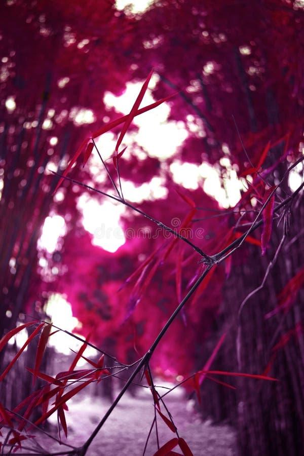 红色竹子 免版税图库摄影