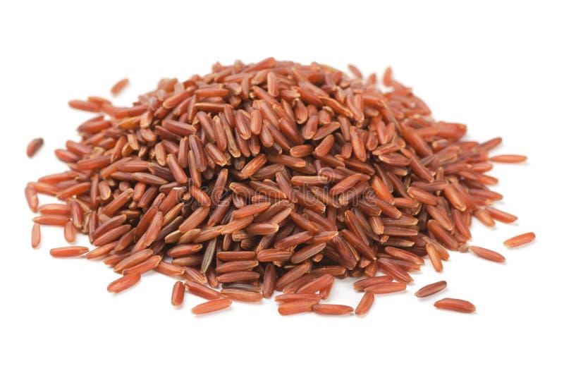 红色米 免版税库存图片
