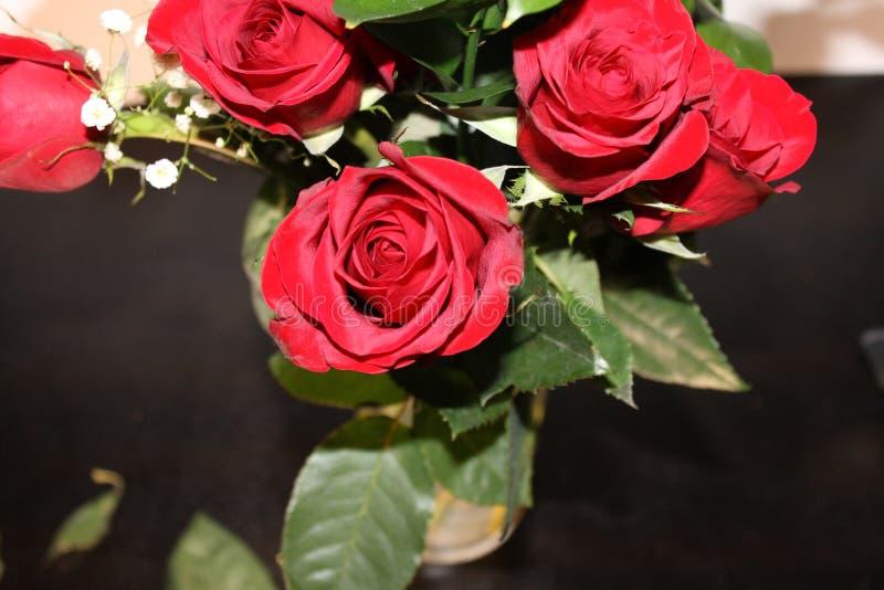红色美丽的玫瑰和绿色叶子 免版税库存图片