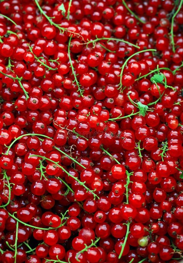 红色背景的无核小葡萄干 图库摄影