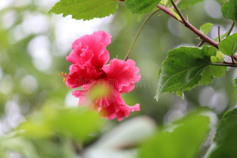 红色花叶子绿色树自然秀丽风景环境野生生物旅行游览 库存图片