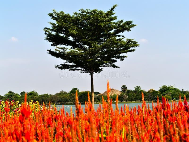 红色花和树与湖 库存照片