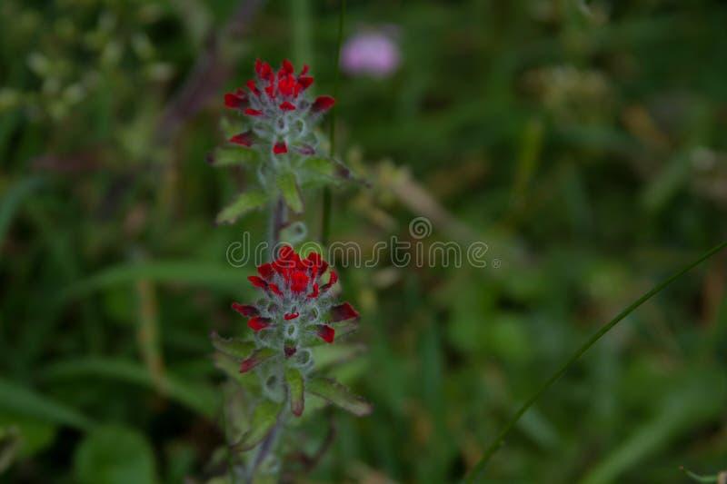 红色花和绿色背景 库存图片