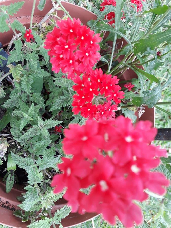 红色花在雨中 免版税库存照片
