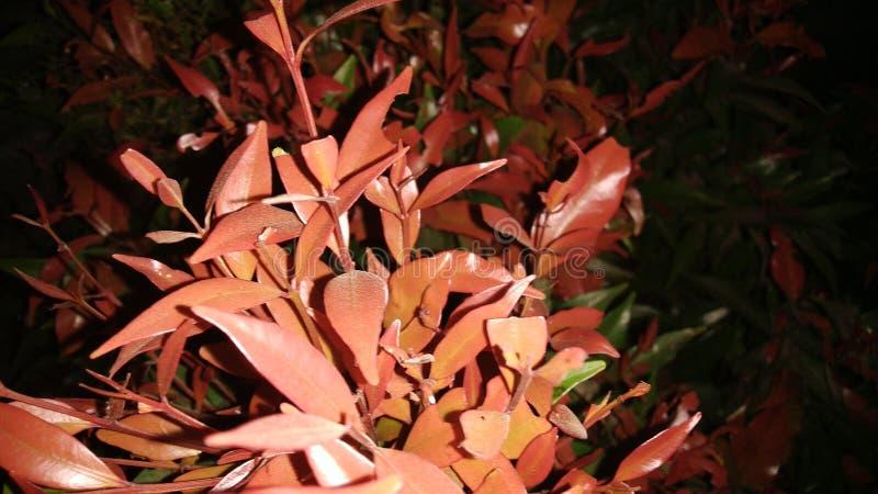 红色花在黑暗的夜 图库摄影