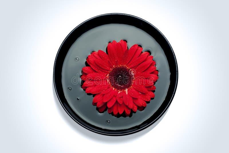 红色花在水中 免版税库存照片